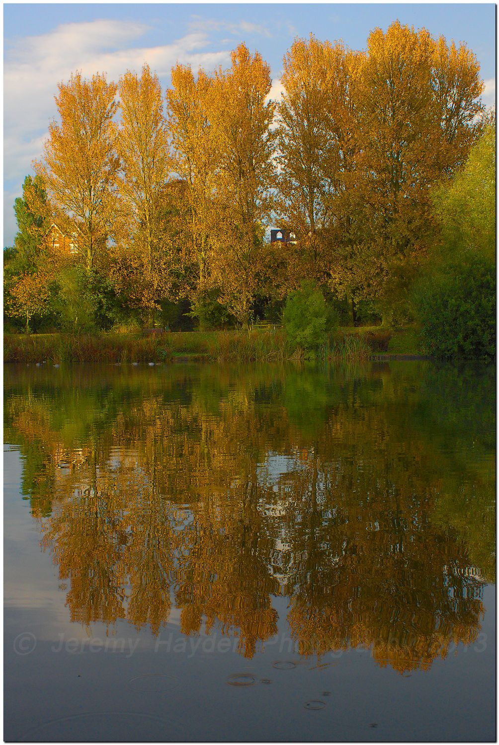 Autumn tsunset tree relections