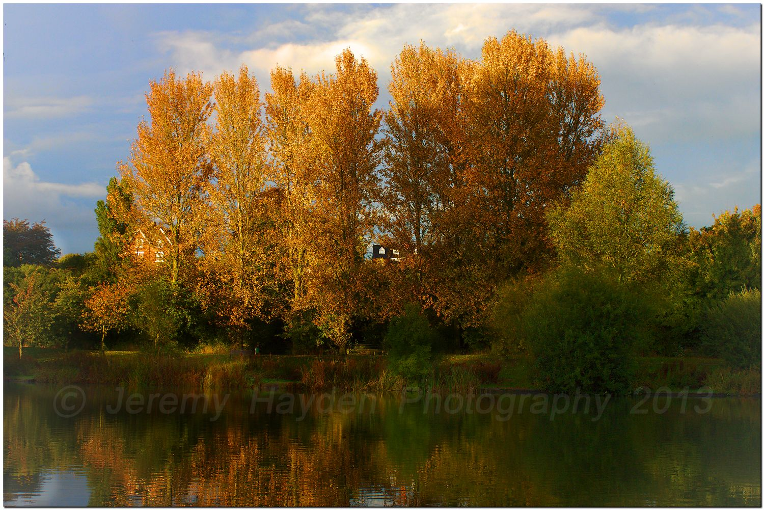 Golden autumn leaves on the trees catching the sunset