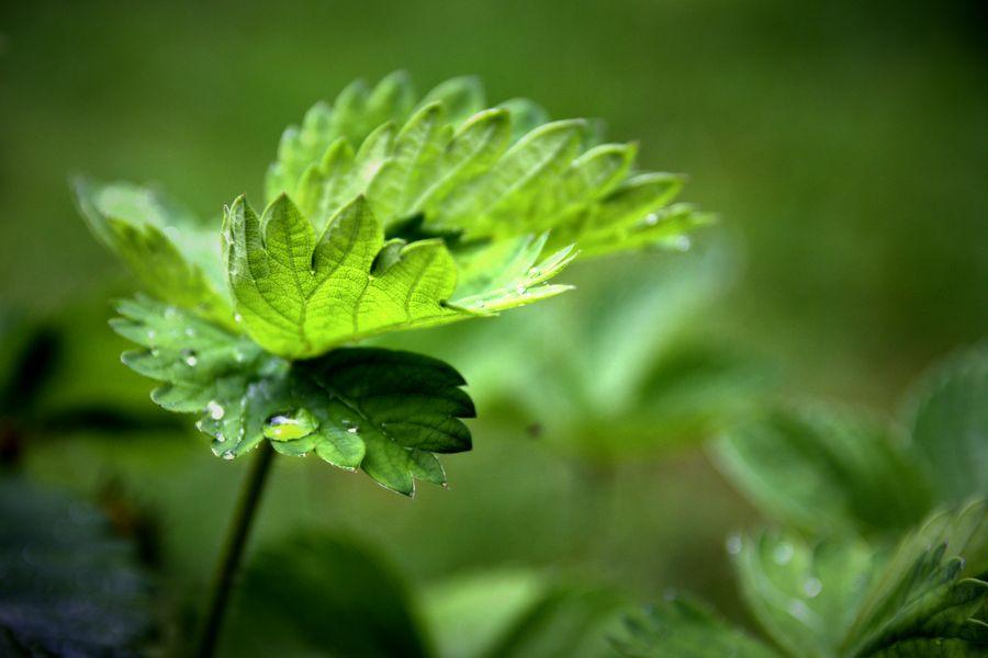 Beautiful Light on Green Leaves
