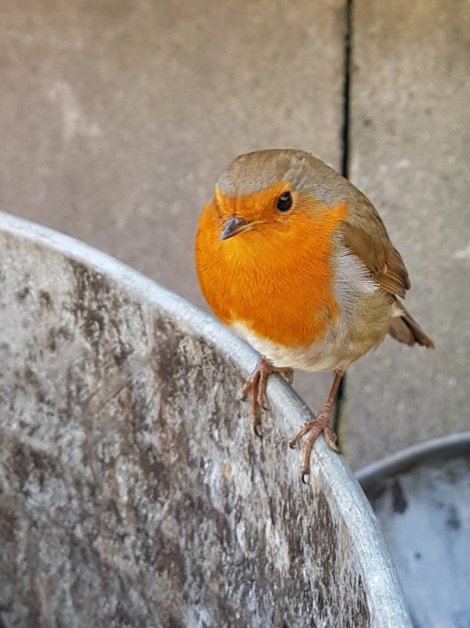 Industrial robin outside a factory
