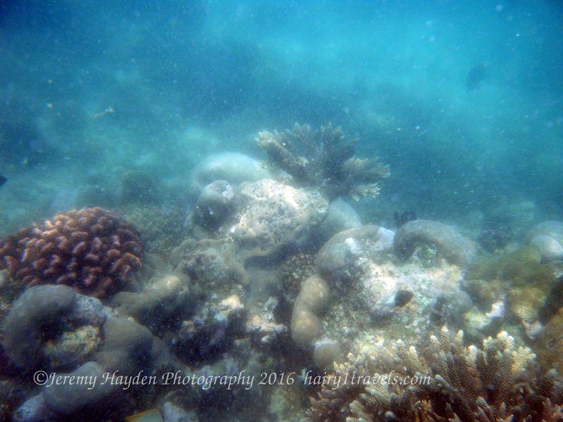 Vilanculos 2015 - snorkelling at Two Mile Reef