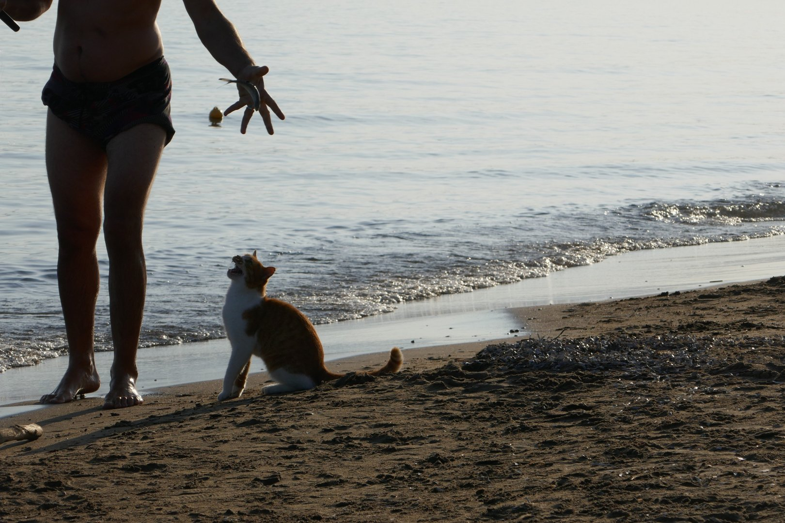 His human caught him a fish - Kalamaki beach, Zakynthos