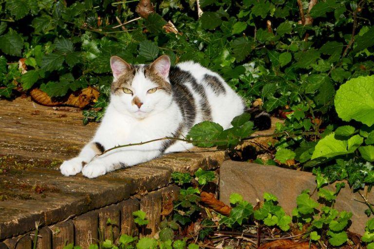 Happy Cat in the sun