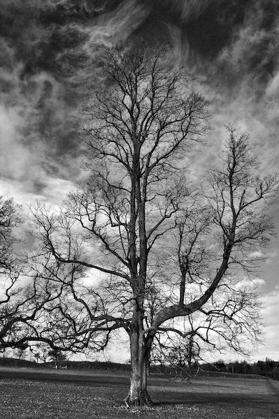 One tree under a cloudy sky