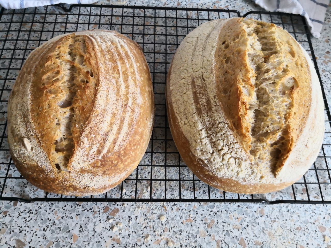 Sourdough bread. Homemade and just out of the oven.