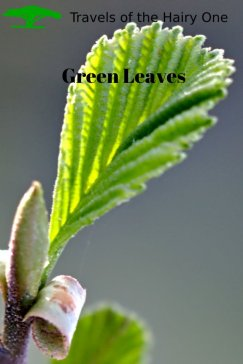 A close up shot of a green leaf in spring time