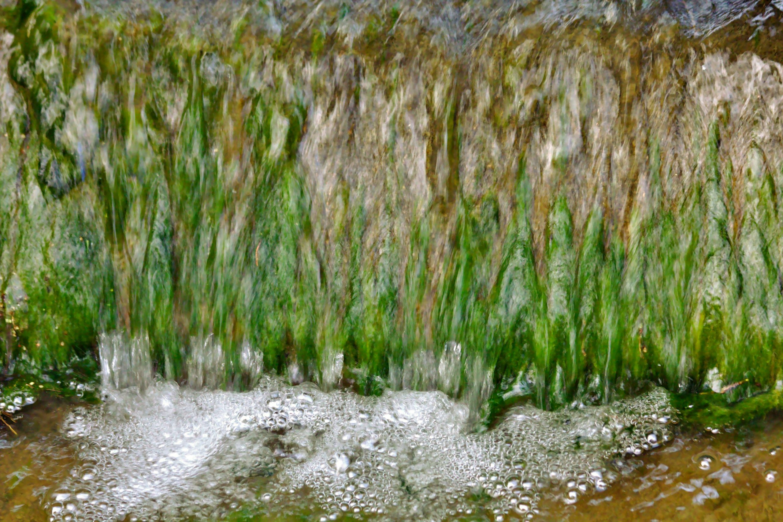 Water bubbles with water running over the algae on the spillway wall blurring the image of the algae.