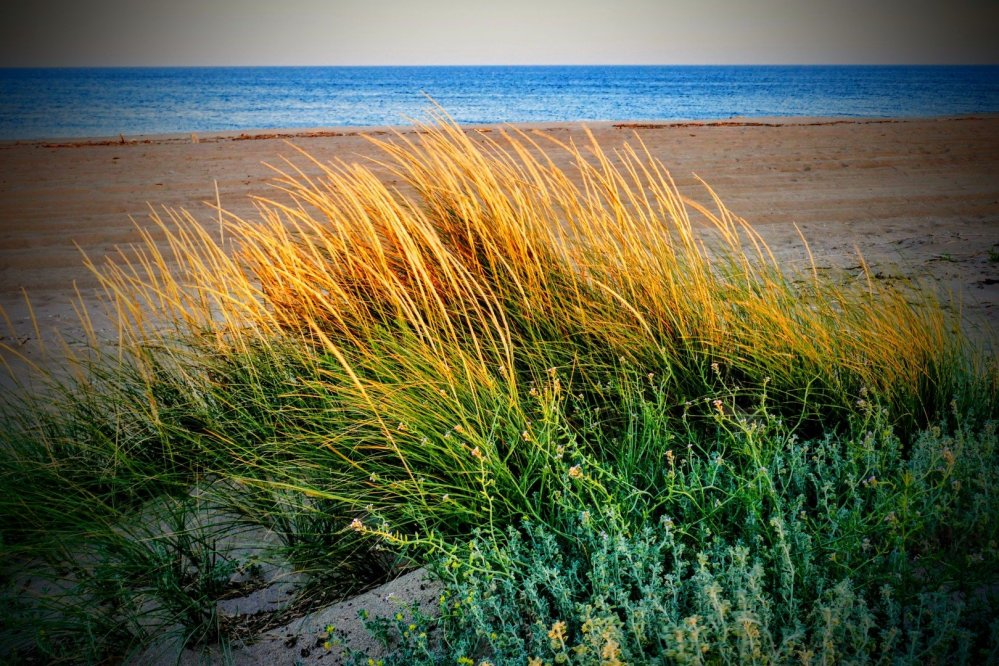 Grass on the Beach in the Sunset