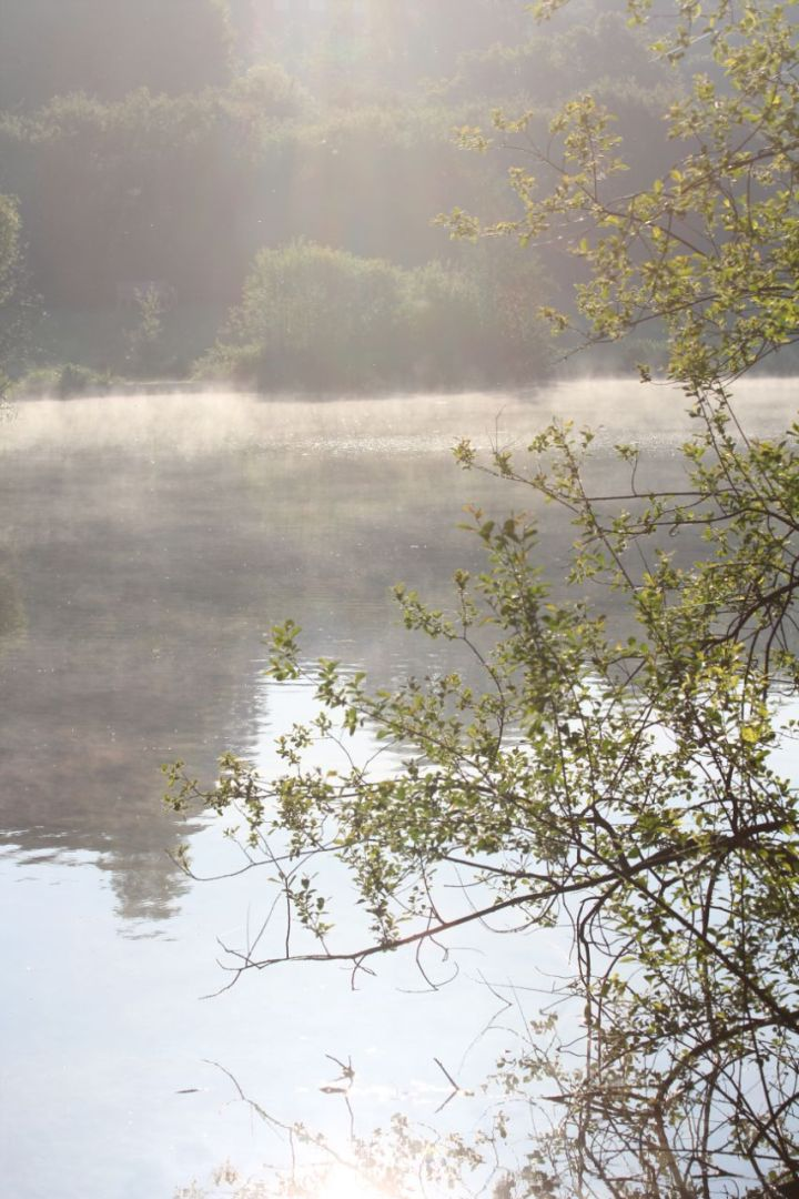 A misty morning at the lake.