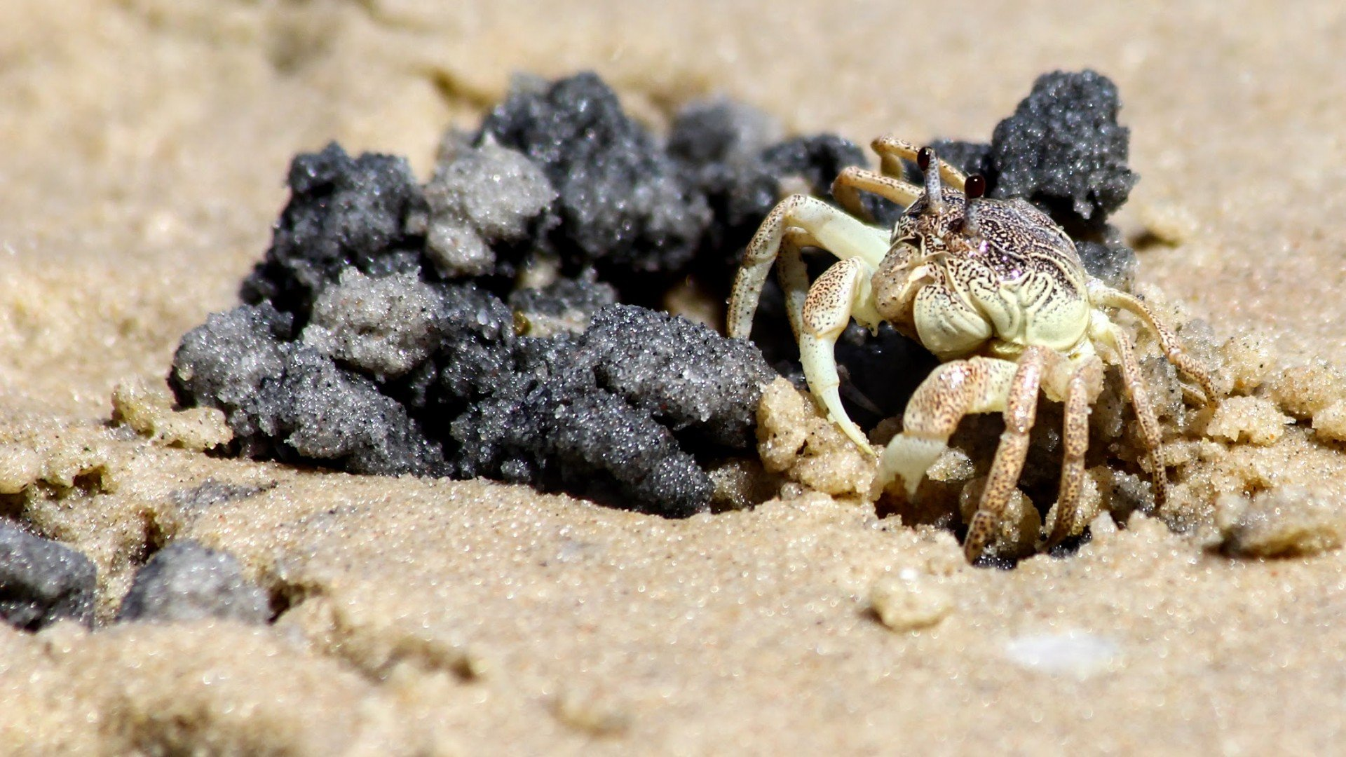 Little Crab on the Beach at Vilanculos