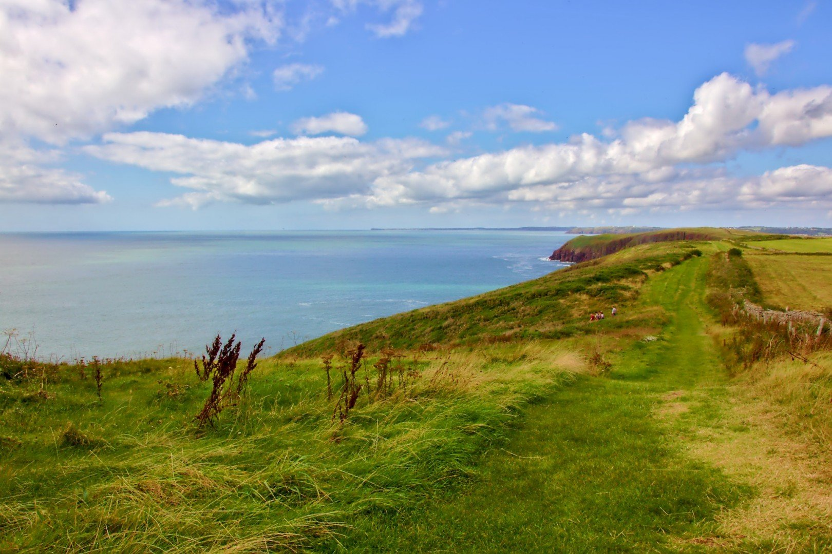 On the Clifftops at the edge of the World on Caldey Island, near Tenby in Pembrokeshire.