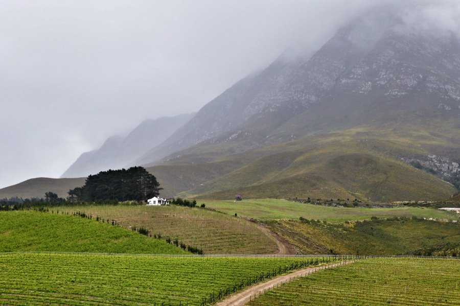In the winelands near Hermanus, this was our view over lunch.