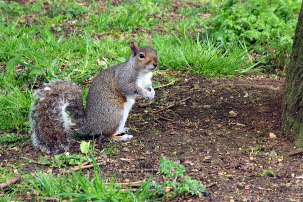 A squirrel pauses with his food to check me out.
